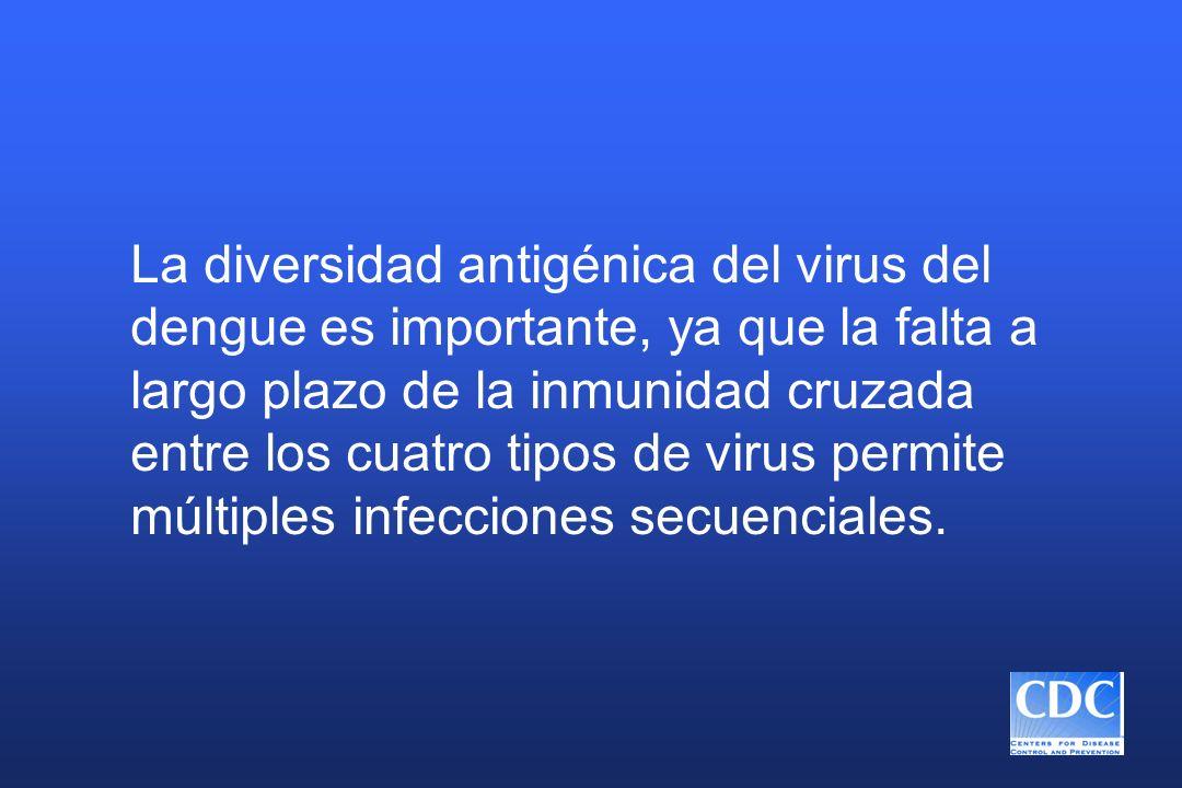 La diversidad antigénica del virus del dengue es importante, ya que la falta a largo plazo de la inmunidad cruzada entre los cuatro tipos de virus per