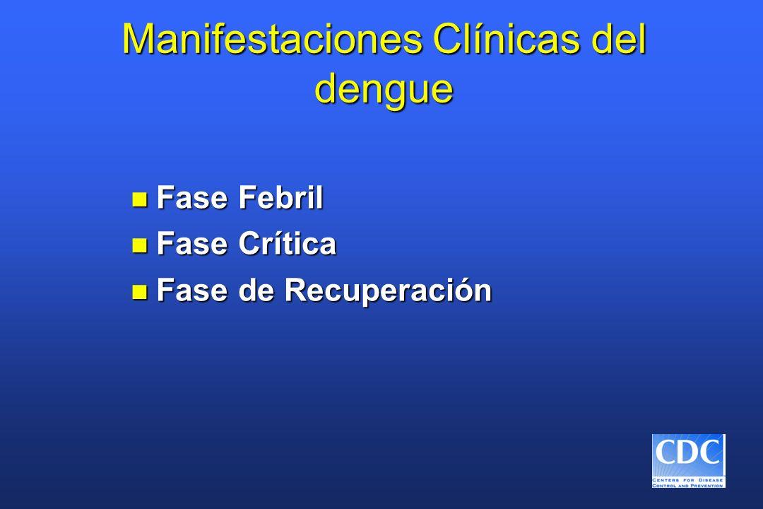 Manifestaciones Clínicas del dengue n Fase Febril n Fase Crítica n Fase de Recuperación