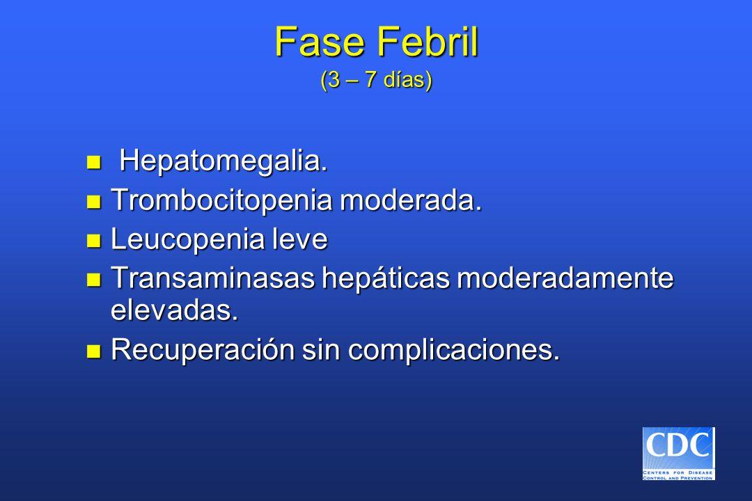 Fase Febril (3 – 7 días) n Hepatomegalia. n Trombocitopenia moderada. n Leucopenia leve n Transaminasas hepáticas moderadamente elevadas. n Recuperaci