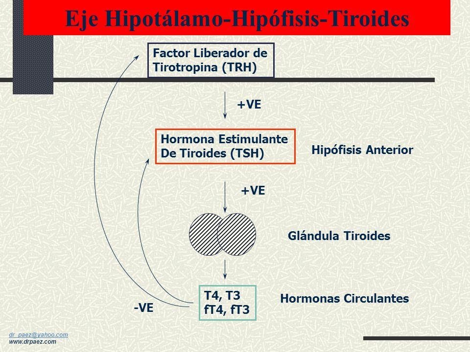 dr_paez@yahoo.com dr_paez@yahoo.com www.drpaez.com. Eje Hipotálamo-Hipófisis-Suprarrenal