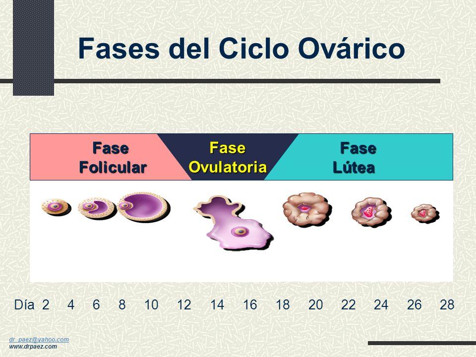dr_paez@yahoo.com dr_paez@yahoo.com www.drpaez.com Ciclo Menstrual Normal