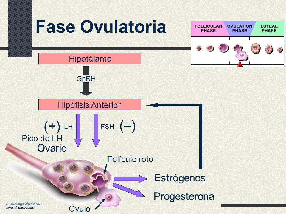 dr_paez@yahoo.com dr_paez@yahoo.com www.drpaez.com Hipófisis Anterior Hipotálamo Estrógenos Ovario Folículo de Graff (+) (–)(–) GnRH LHFSH Fase Folicu