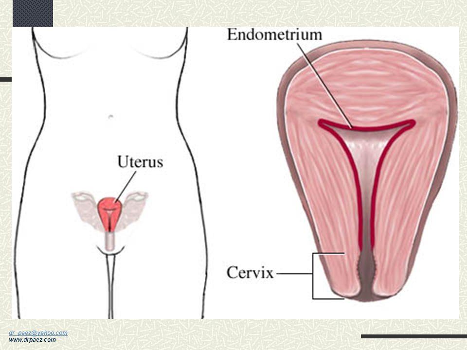 dr_paez@yahoo.com dr_paez@yahoo.com www.drpaez.com Ciclo Endometrial Fase Proliferativa Fase Secretora Fase Menstrual MenstruaciónOvulación EstradiolP