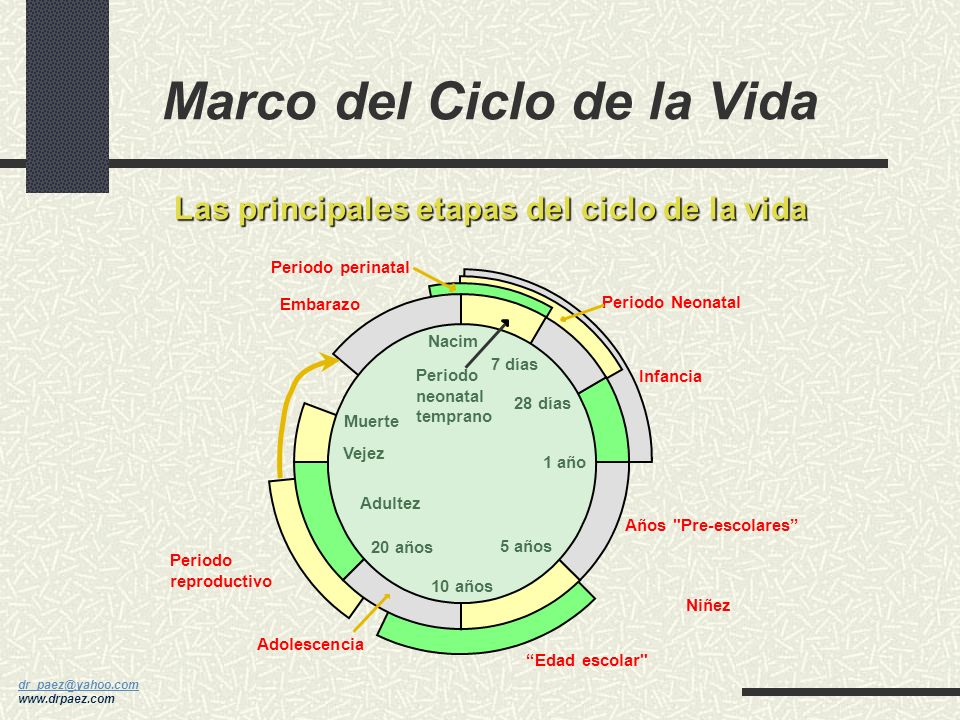 dr_paez@yahoo.com dr_paez@yahoo.com www.drpaez.com Etapas Críticas de la Mujer Etapa fetal Niñez Pubertad Embarazo y lactancia Perimenopausia y menopa