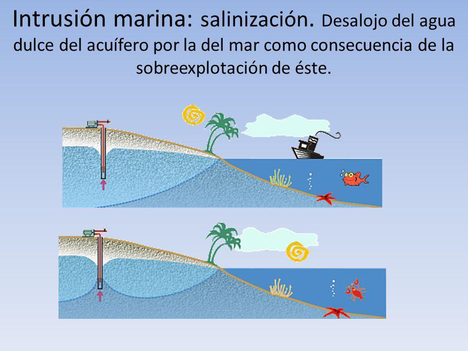 Intrusión marina: salinización. Desalojo del agua dulce del acuífero por la del mar como consecuencia de la sobreexplotación de éste.