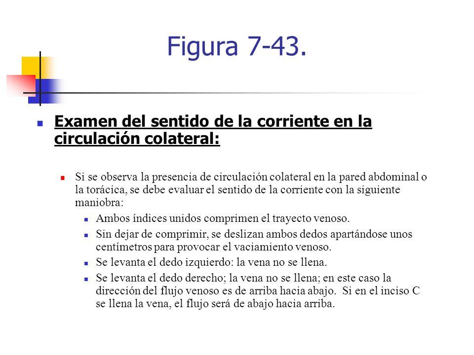 Figura 7-43. Examen del sentido de la corriente en la circulación colateral: Si se observa la presencia de circulación colateral en la pared abdominal