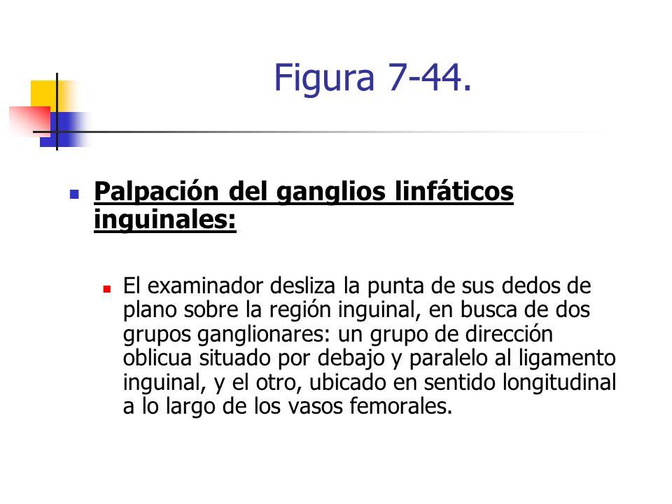 Figura 7-44. Palpación del ganglios linfáticos inguinales: El examinador desliza la punta de sus dedos de plano sobre la región inguinal, en busca de