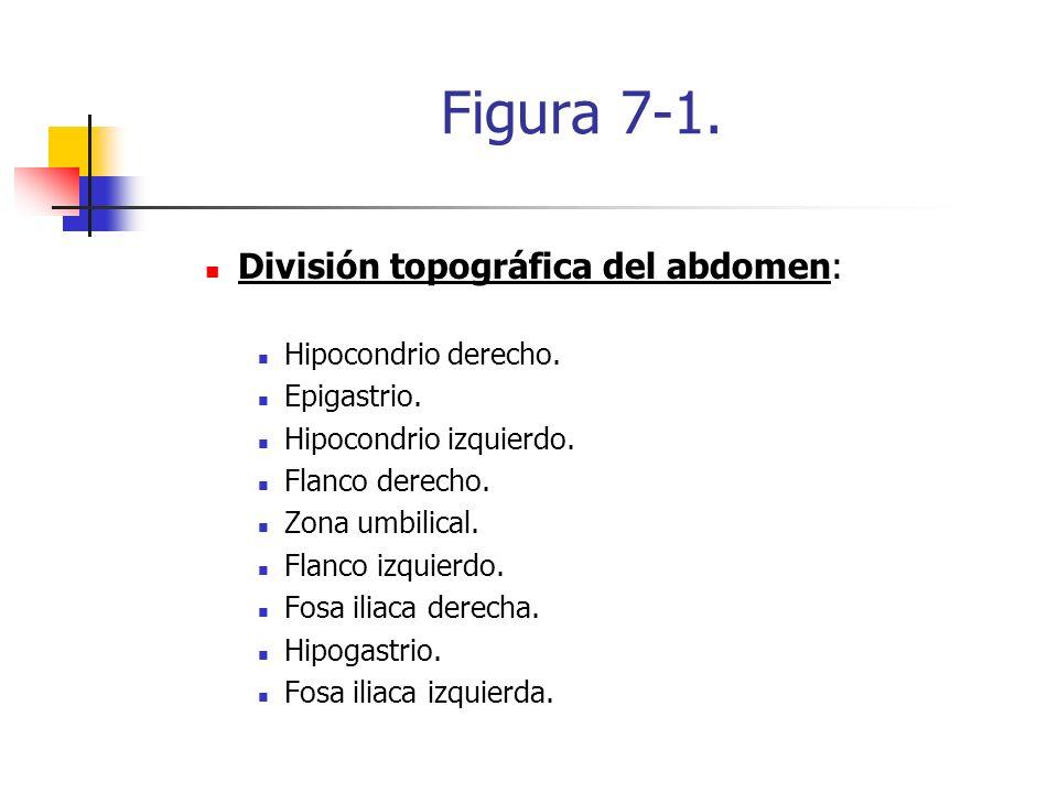 Figura 7-1. División topográfica del abdomen: Hipocondrio derecho. Epigastrio. Hipocondrio izquierdo. Flanco derecho. Zona umbilical. Flanco izquierdo