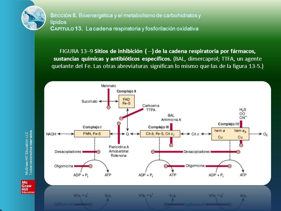 FIGURA 13–9 Sitios de inhibición ( ) de la cadena respiratoria por fármacos, sustancias químicas y antibióticos específicos. (BAL, dimercaprol; TTFA,