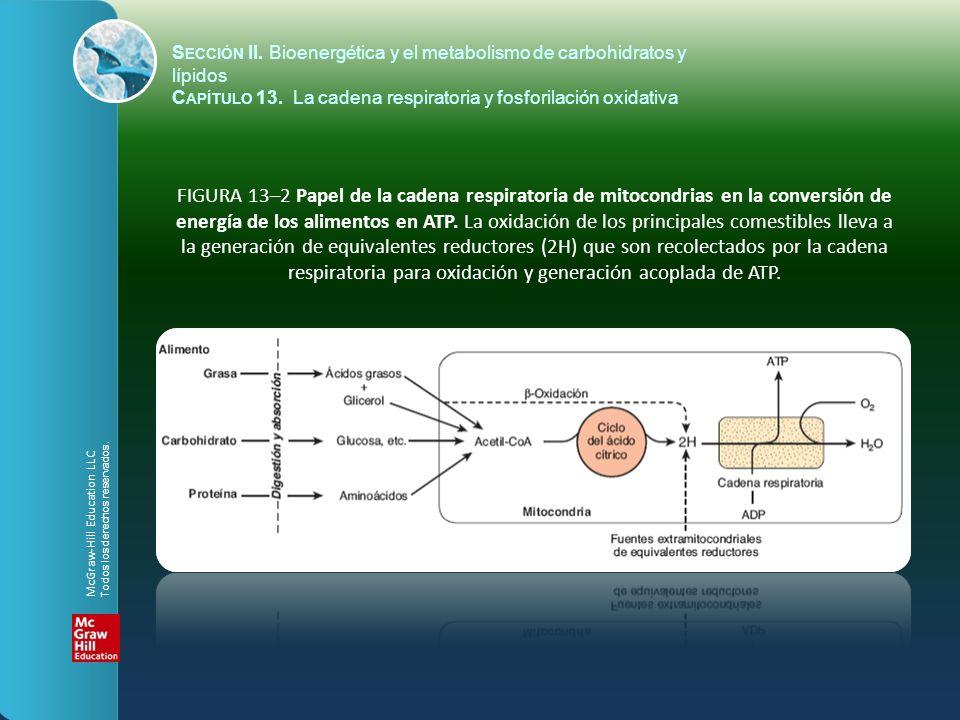 FIGURA 13–2 Papel de la cadena respiratoria de mitocondrias en la conversión de energía de los alimentos en ATP. La oxidación de los principales comes