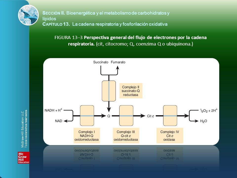 FIGURA 13–3 Perspectiva general del flujo de electrones por la cadena respiratoria. (cit, citocromo; Q, coenzima Q o ubiquinona.) S ECCIÓN II. Bioener