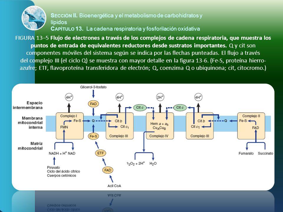 FIGURA 13–6 El ciclo Q.
