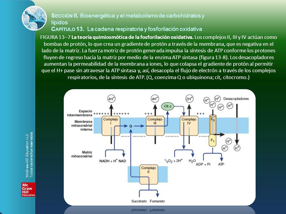 FIGURA 13–8 Mecanismo de producción de ATP por la ATP sintasa.