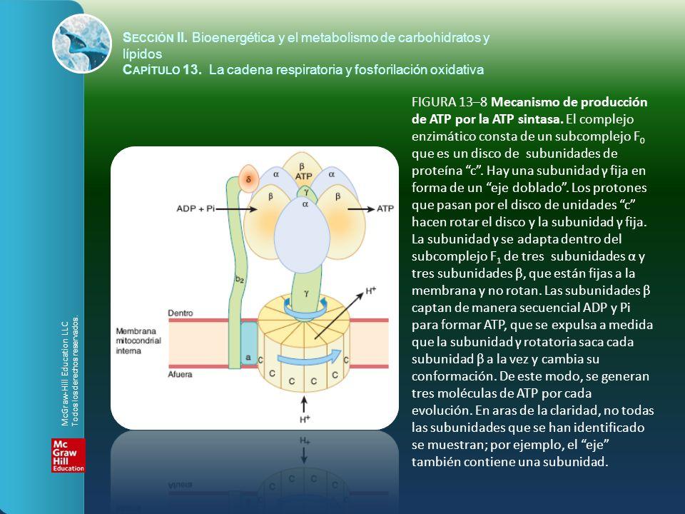 FIGURA 13–9 Sitios de inhibición ( ) de la cadena respiratoria por fármacos, sustancias químicas y antibióticos específicos.