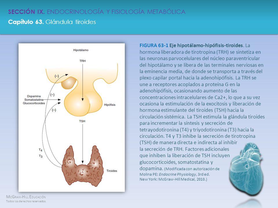 M C G RAW- H ILL E DUCACIÓN Todos los derechos reservados. Capítulo 63. Glándula tiroides SECCIÓN IX. ENDOCRINOLOGÍA Y FISIOLOGÍA METABÓLICA FIGURA 63