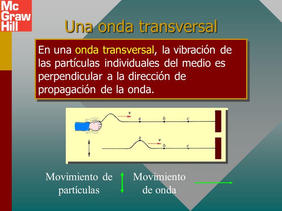 Una onda transversal En una onda transversal, la vibración de las partículas individuales del medio es perpendicular a la dirección de propagación de la onda.