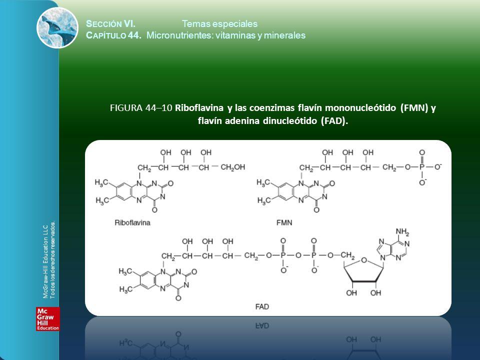 S ECCIÓN VI.Temas especiales C APÍTULO 44. Micronutrientes: vitaminas y minerales FIGURA 44–10 Riboflavina y las coenzimas flavín mononucleótido (FMN)