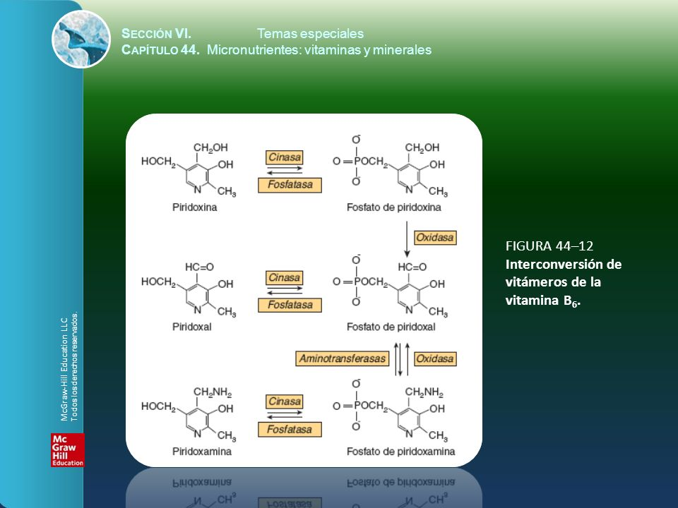 S ECCIÓN VI.Temas especiales C APÍTULO 44. Micronutrientes: vitaminas y minerales FIGURA 44–12 Interconversión de vitámeros de la vitamina B 6. McGraw
