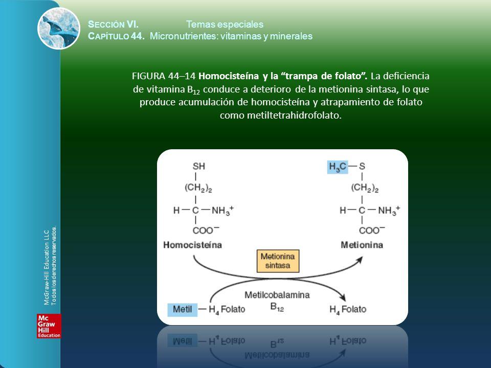 S ECCIÓN VI.Temas especiales C APÍTULO 44. Micronutrientes: vitaminas y minerales FIGURA 44–14 Homocisteína y la trampa de folato. La deficiencia de v