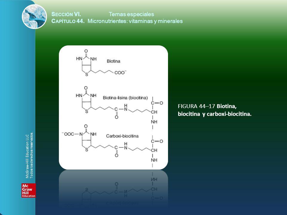 S ECCIÓN VI.Temas especiales C APÍTULO 44. Micronutrientes: vitaminas y minerales FIGURA 44–17 Biotina, biocitina y carboxi-biocitina. McGraw-Hill Edu