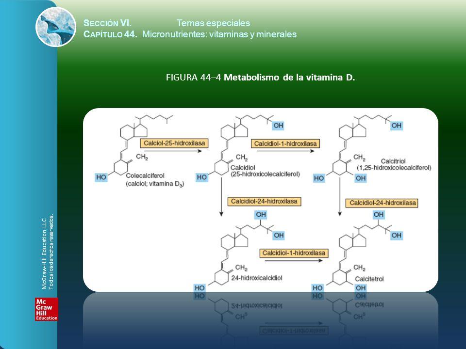 S ECCIÓN VI.Temas especiales C APÍTULO 44. Micronutrientes: vitaminas y minerales FIGURA 44–4 Metabolismo de la vitamina D. McGraw-Hill Education LLC