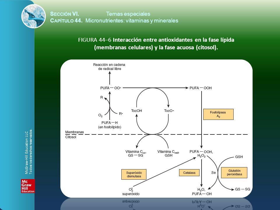 S ECCIÓN VI.Temas especiales C APÍTULO 44. Micronutrientes: vitaminas y minerales FIGURA 44–6 Interacción entre antioxidantes en la fase lípida (membr