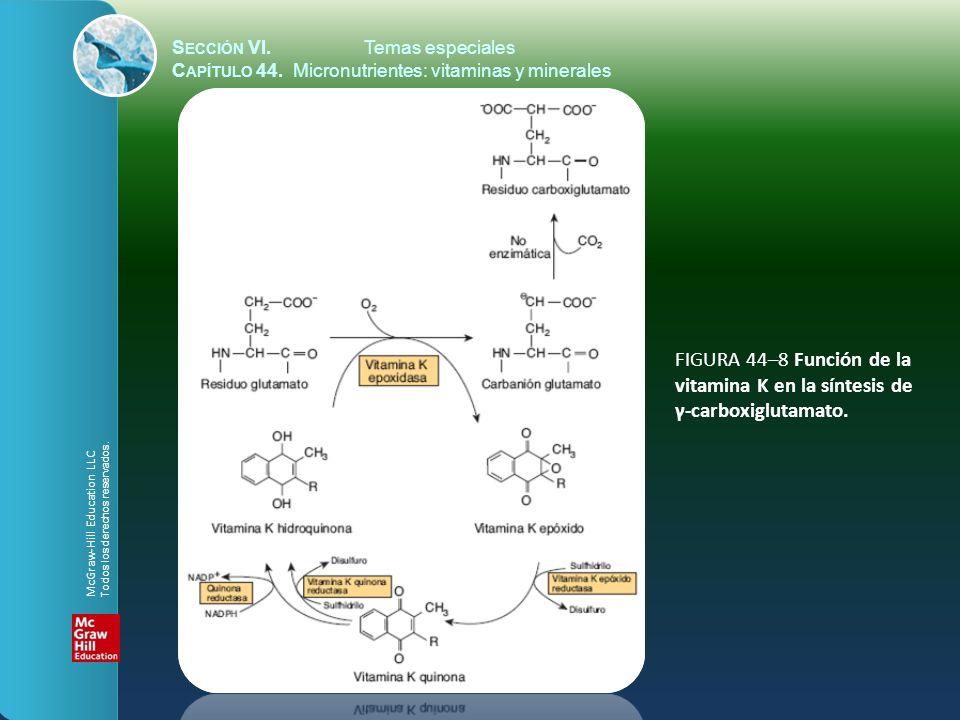 S ECCIÓN VI.Temas especiales C APÍTULO 44. Micronutrientes: vitaminas y minerales FIGURA 44–8 Función de la vitamina K en la síntesis de γ-carboxiglut