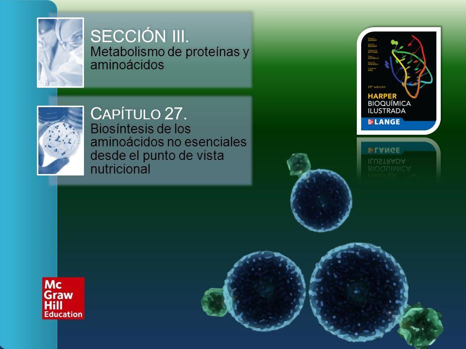 SECCIÓN III. Metabolismo de proteínas y aminoácidos C APÍTULO 27. Biosíntesis de los aminoácidos no esenciales desde el punto de vista nutricional