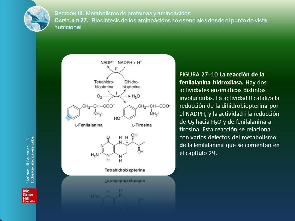FIGURA 27–10 La reacción de la fenilalanina hidroxilasa. Hay dos actividades enzimáticas distintas involucradas. La actividad II cataliza la reducción