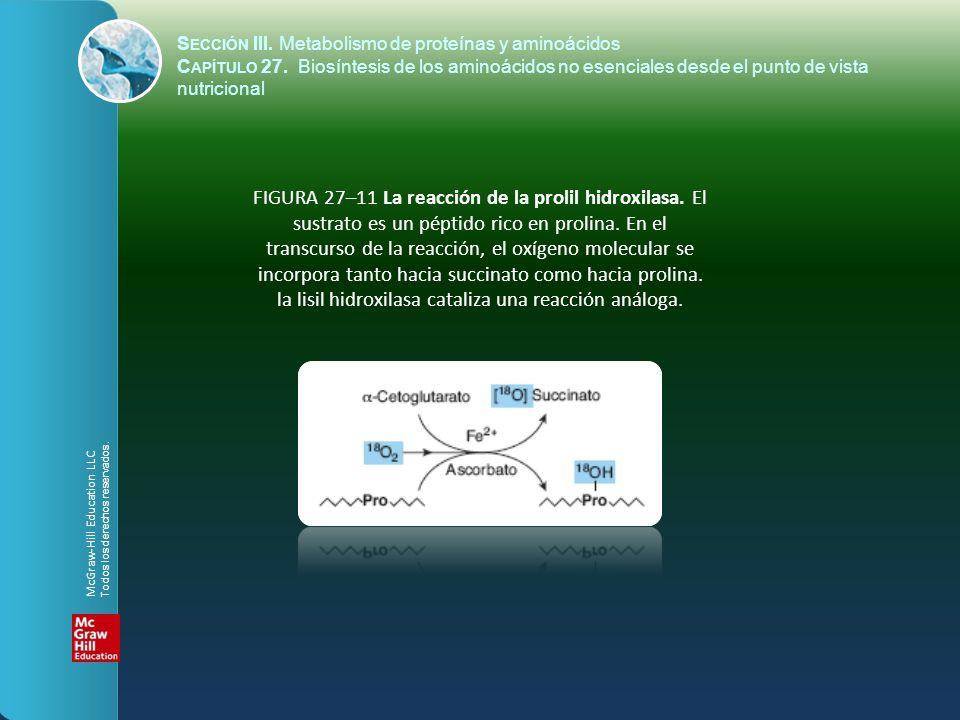 FIGURA 27–11 La reacción de la prolil hidroxilasa. El sustrato es un péptido rico en prolina. En el transcurso de la reacción, el oxígeno molecular se