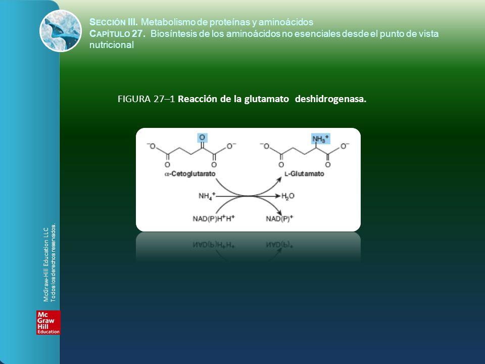 FIGURA 27–2 Reacción de la glutamina sintetasa.S ECCIÓN III.