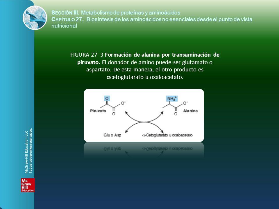 FIGURA 27–3 Formación de alanina por transaminación de piruvato. El donador de amino puede ser glutamato o aspartato. De esta manera, el otro producto