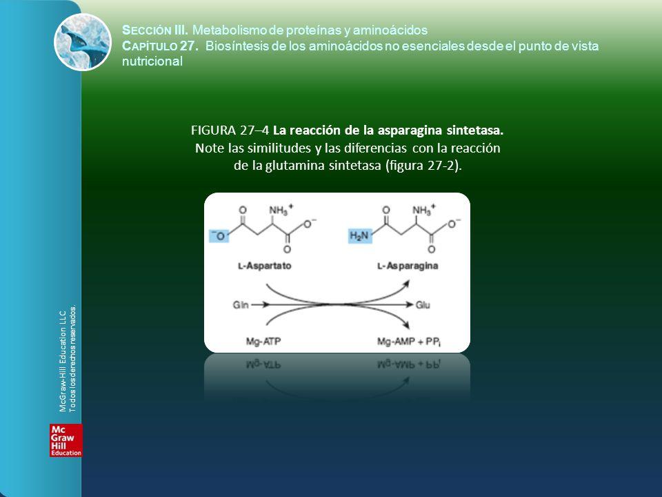 FIGURA 27–4 La reacción de la asparagina sintetasa. Note las similitudes y las diferencias con la reacción de la glutamina sintetasa (figura 27-2). S
