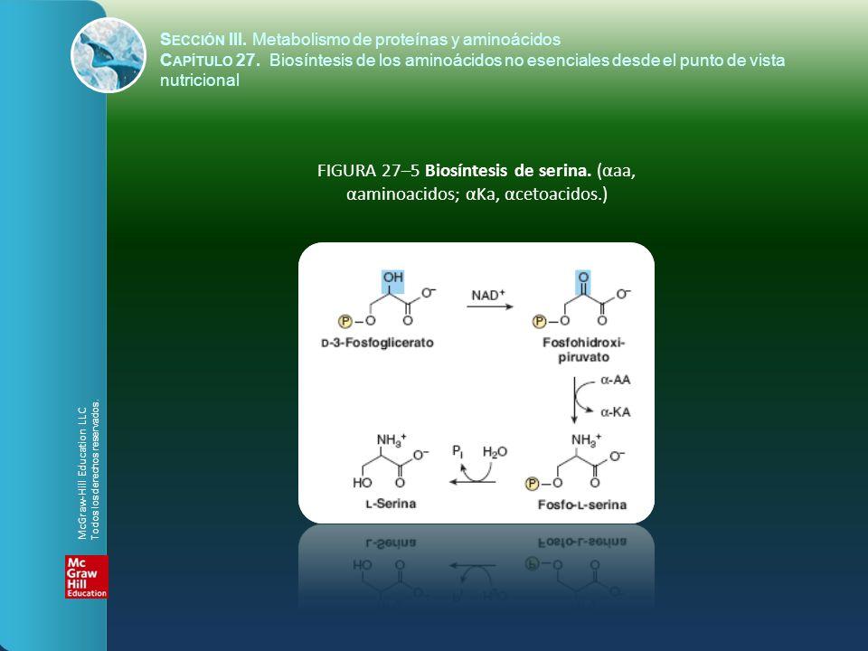 FIGURA 27–5 Biosíntesis de serina. (αaa, αaminoacidos; αKa, αcetoacidos.) S ECCIÓN III. Metabolismo de proteínas y aminoácidos C APÍTULO 27. Biosíntes