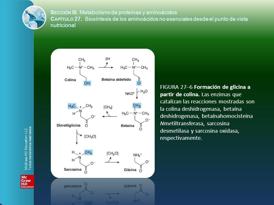 FIGURA 27–6 Formación de glicina a partir de colina. Las enzimas que catalizan las reacciones mostradas son la colina deshidrogenasa, betaína deshidro