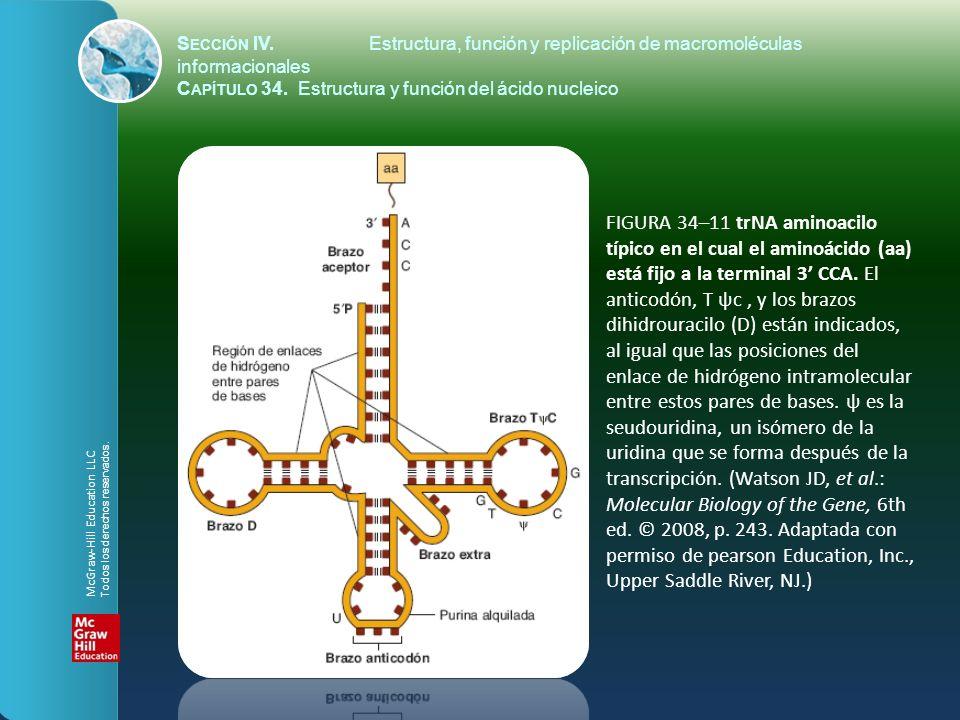 FIGURA 34–11 trNA aminoacilo típico en el cual el aminoácido (aa) está fijo a la terminal 3 CCA. El anticodón, T ψc, y los brazos dihidrouracilo (D) e