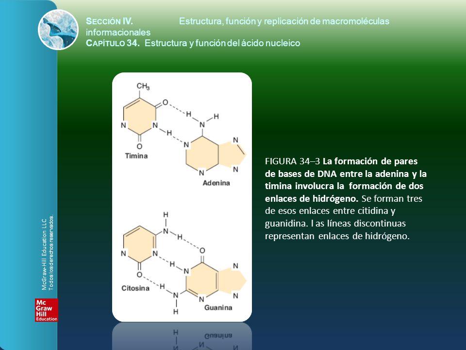 FIGURA 34–3 La formación de pares de bases de DNA entre la adenina y la timina involucra la formación de dos enlaces de hidrógeno. Se forman tres de e