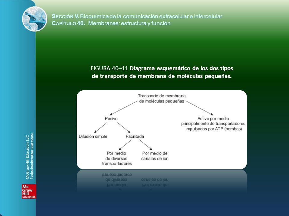 FIGURA 40–11 Diagrama esquemático de los dos tipos de transporte de membrana de moléculas pequeñas. S ECCIÓN V.Bioquímica de la comunicación extracelu