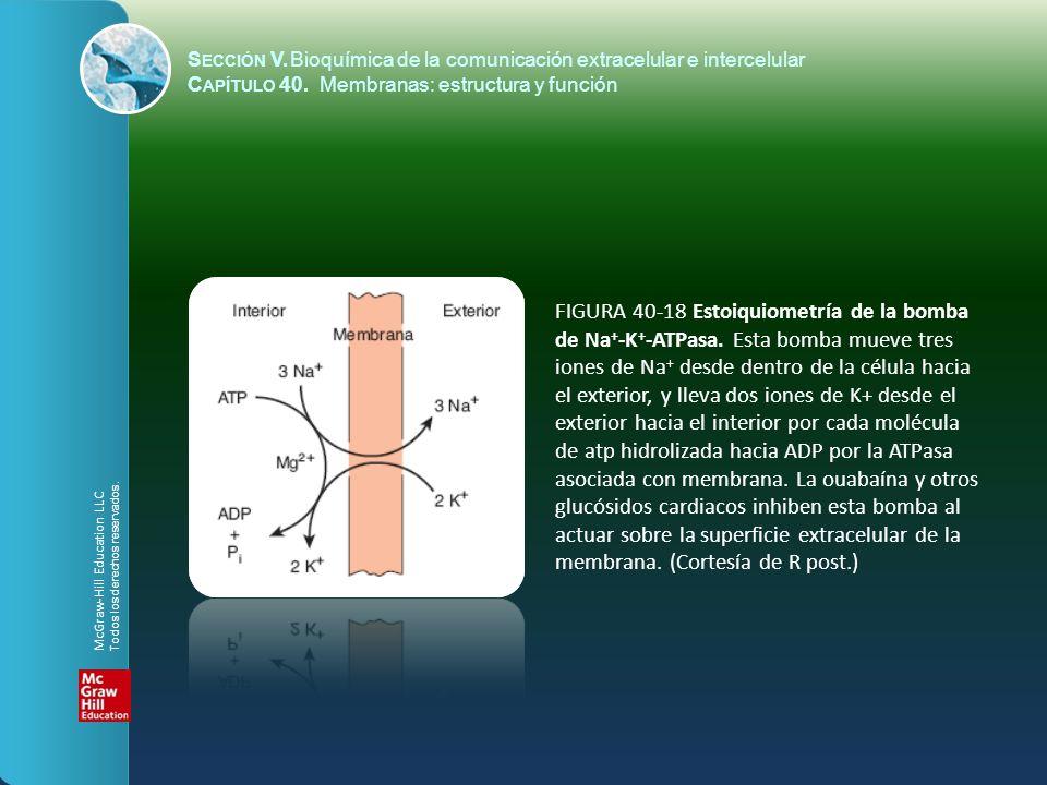 FIGURA 40-18 Estoiquiometría de la bomba de Na + -K + -ATPasa. Esta bomba mueve tres iones de Na + desde dentro de la célula hacia el exterior, y llev