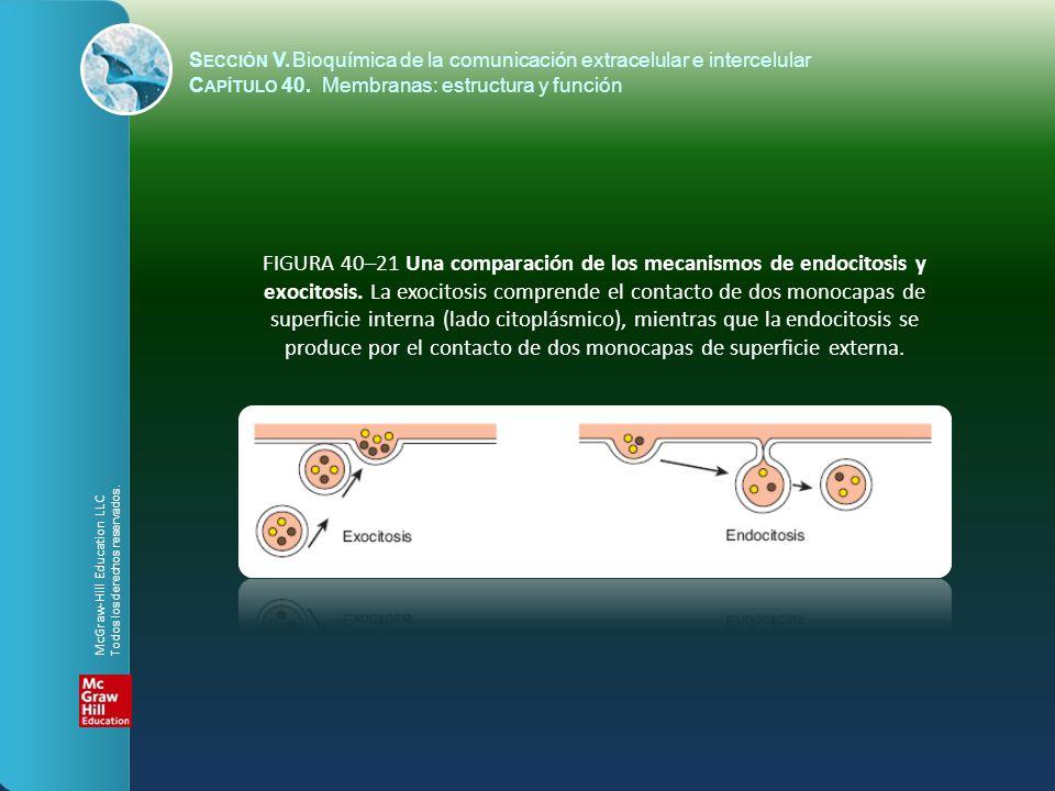 FIGURA 40–21 Una comparación de los mecanismos de endocitosis y exocitosis. La exocitosis comprende el contacto de dos monocapas de superficie interna