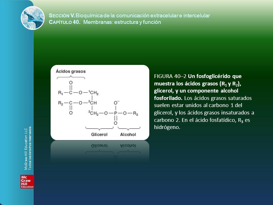 FIGURA 40–13 Una comparación de la cinética de difusión mediada por acarreador (facilitada) con la difusión pasiva.