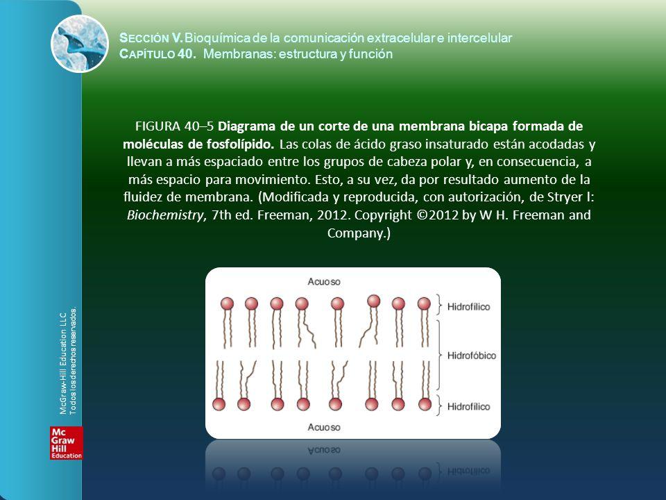 FIGURA 40-6 Coeficientes de permeabilidad del agua, algunos iones, y otras moléculas pequeñas, en membranas bicapa.