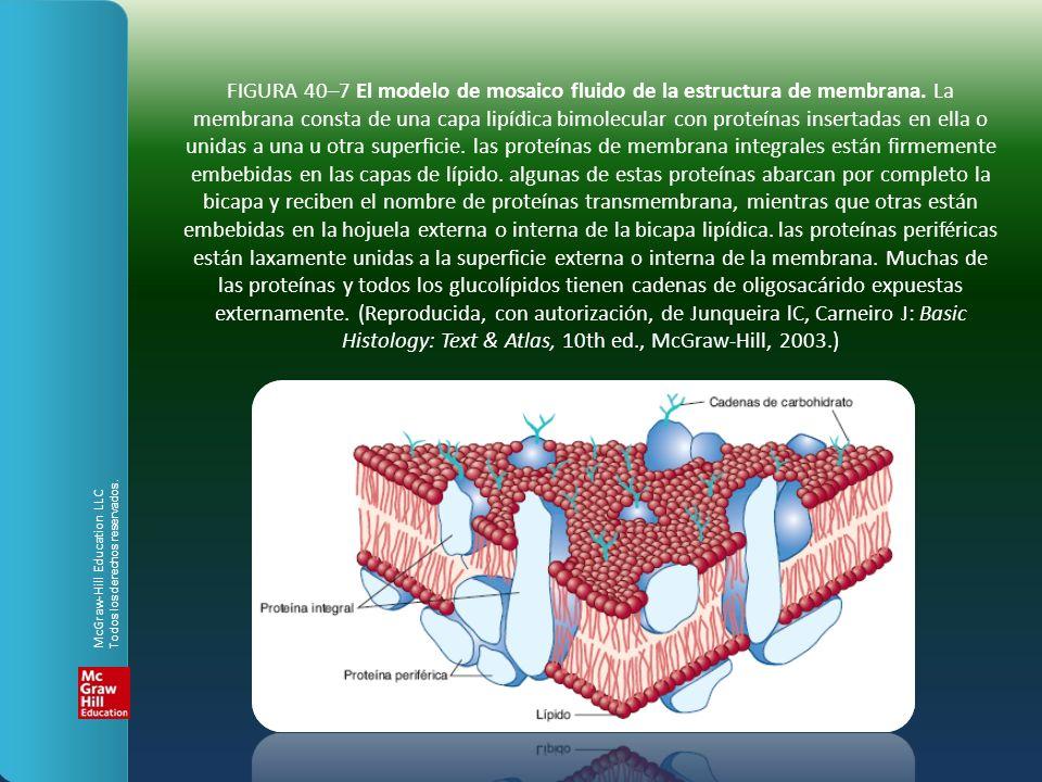 FIGURA 40–7 El modelo de mosaico fluido de la estructura de membrana. La membrana consta de una capa lipídica bimolecular con proteínas insertadas en