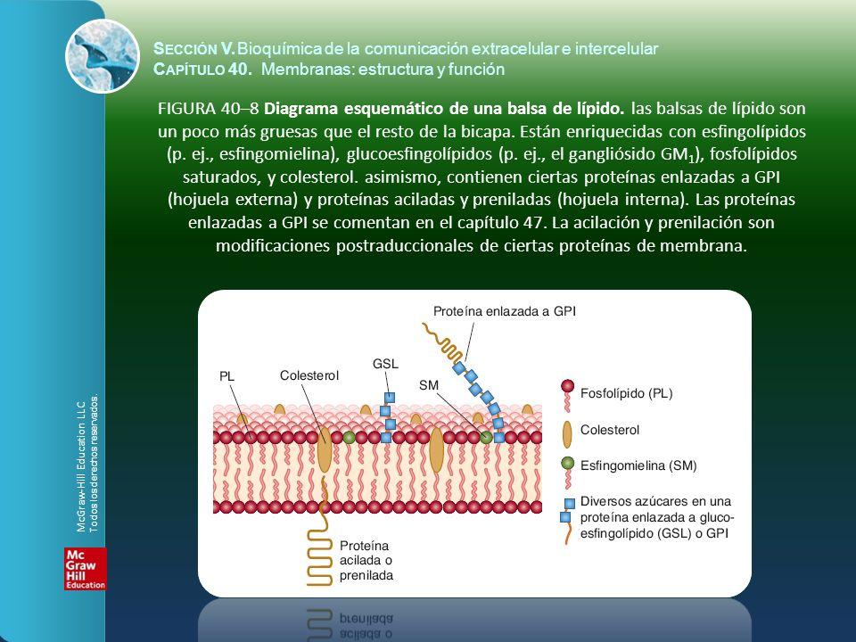 FIGURA 40–19 El movimiento transcelular de glucosa en una célula intestinal.