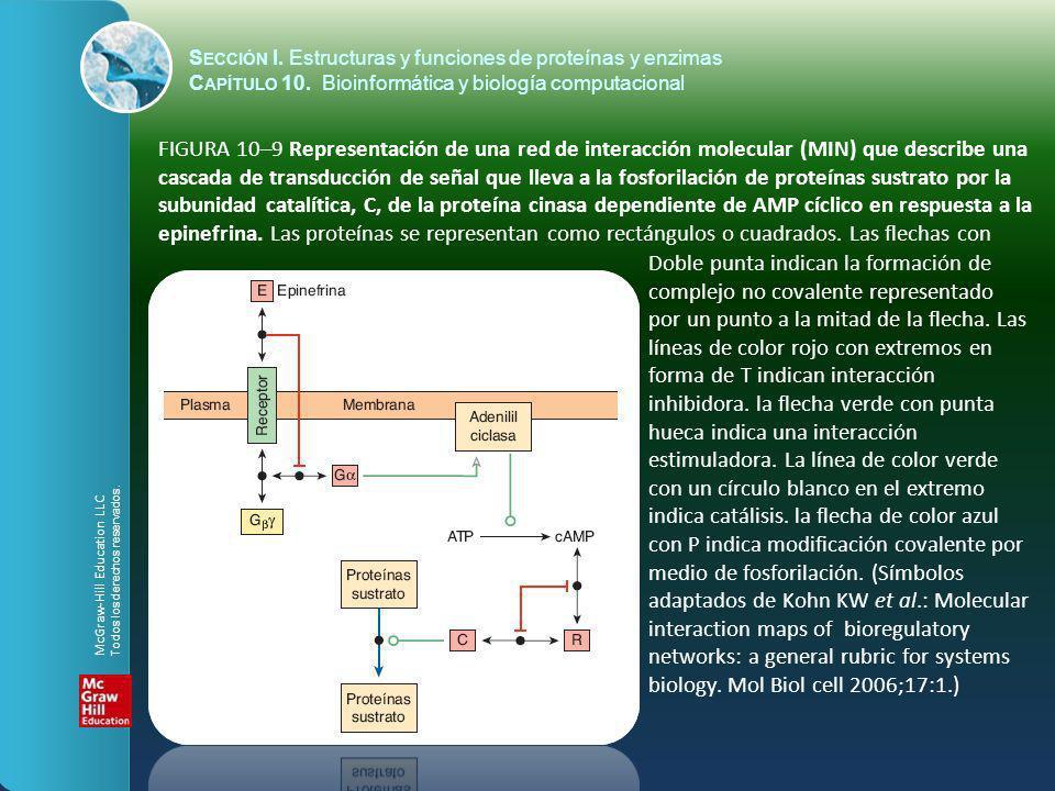 FIGURA 10–9 Representación de una red de interacción molecular (MIN) que describe una cascada de transducción de señal que lleva a la fosforilación de