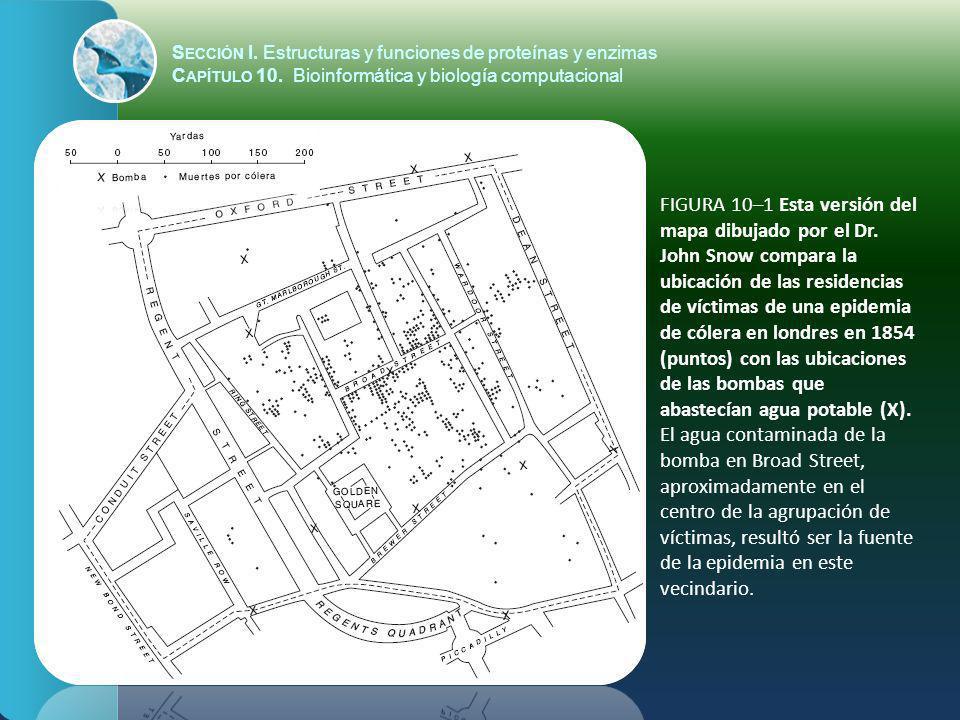 S ECCIÓN I. Estructuras y funciones de proteínas y enzimas C APÍTULO 10. Bioinformática y biología computacional FIGURA 10–1 Esta versión del mapa dib