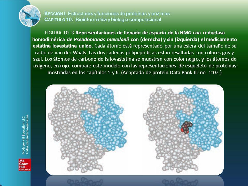 FIGURA 10–3 Representaciones de llenado de espacio de la HMG-coa reductasa homodimérica de Pseudomonas mevalonii con (derecha) y sin (izquierda) el me