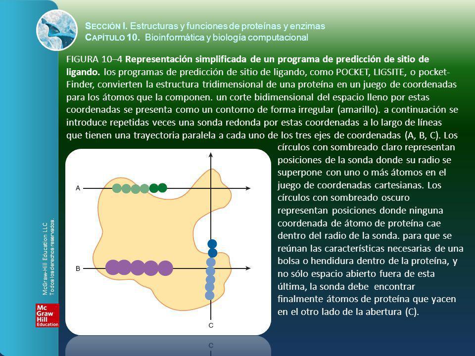 FIGURA 10–4 Representación simplificada de un programa de predicción de sitio de ligando. los programas de predicción de sitio de ligando, como POCKET