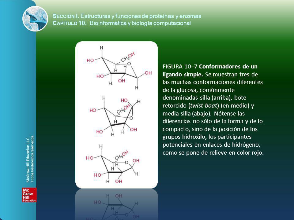 FIGURA 10–7 Conformadores de un ligando simple. Se muestran tres de las muchas conformaciones diferentes de la glucosa, comúnmente denominadas silla (