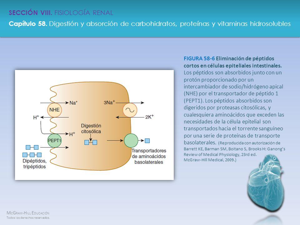 M C G RAW- H ILL E DUCACIÓN Todos los derechos reservados. Capítulo 58. Digestión y absorción de carbohidratos, proteínas y vitaminas hidrosolubles SE